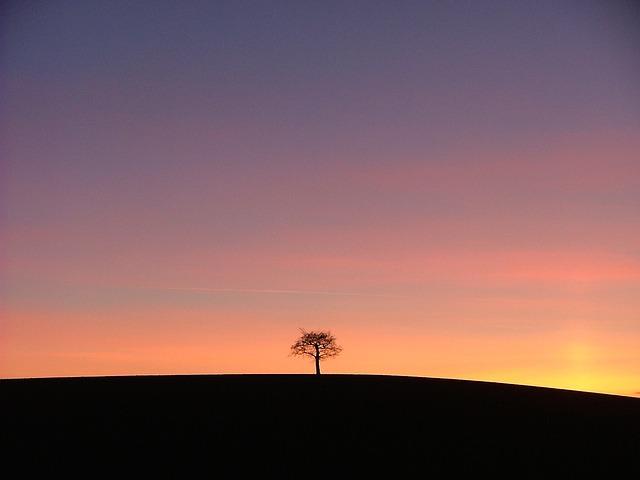 tree-648788_640