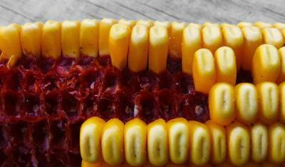 corn-948294_640