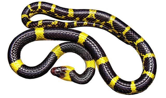 The Snake Mishnah