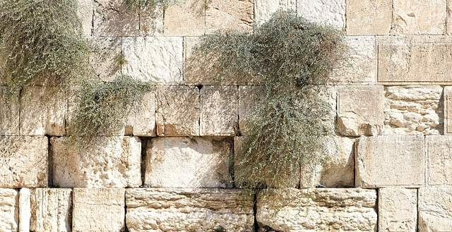 Is There a Greeting for Tisha B'Av?